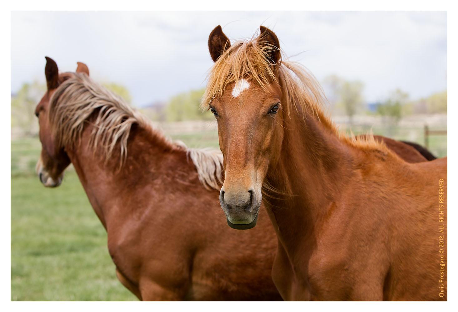 Horse3186-Feb14-2012