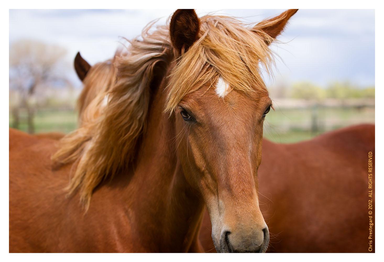 Horse3196-Feb13-2012