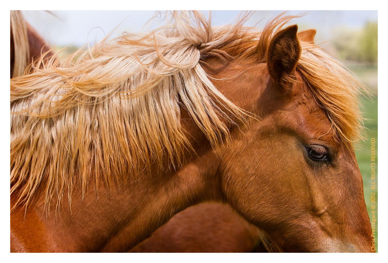 Horse3201-Feb13-2012
