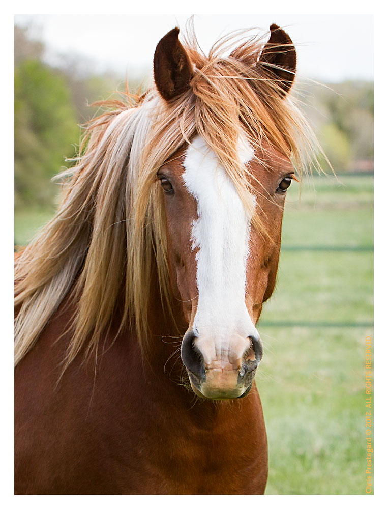 Horse3231-Feb20-2012