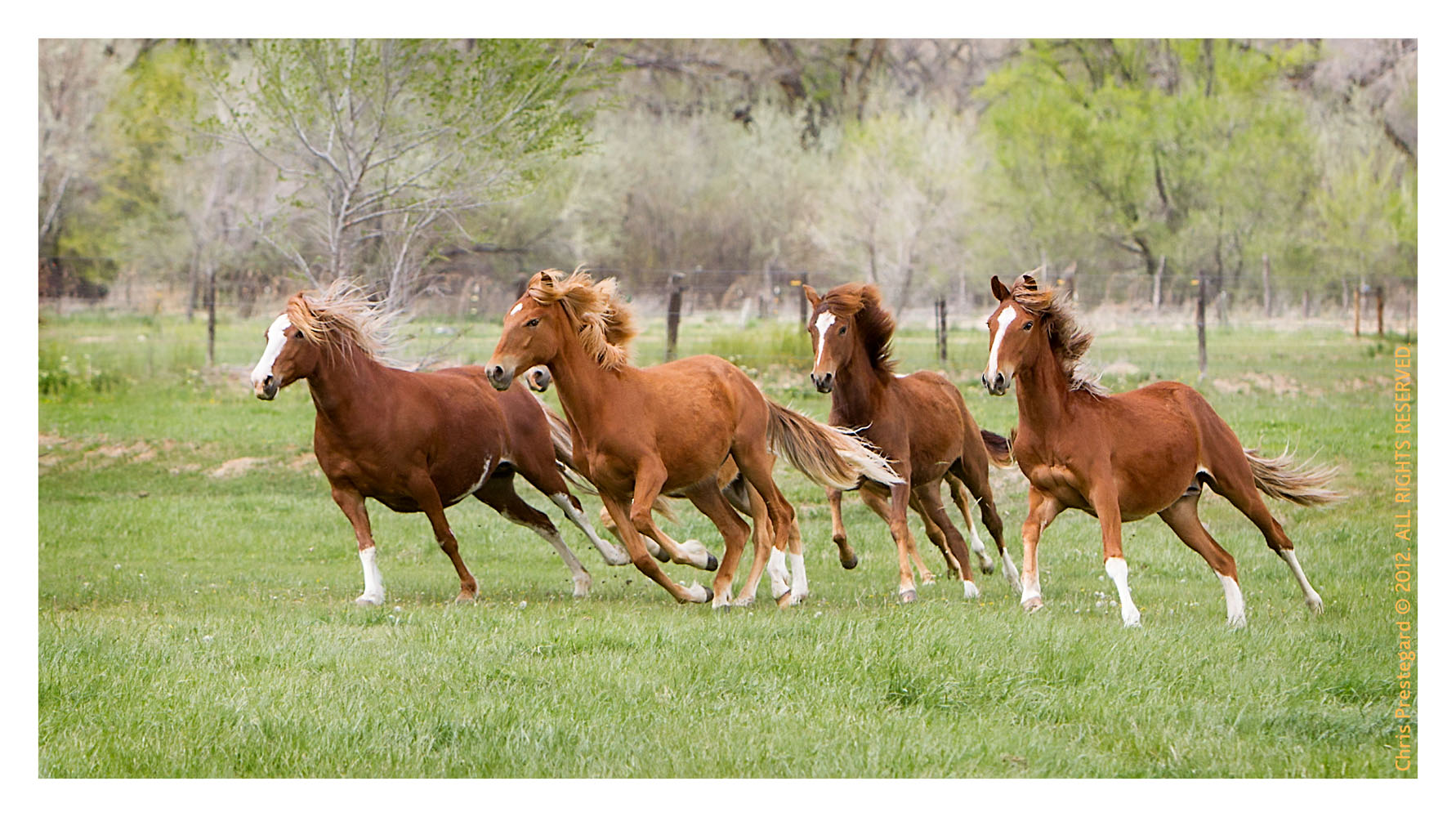 Horse3348-Feb11-2012