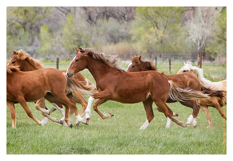 Horse3358-Feb13-2012