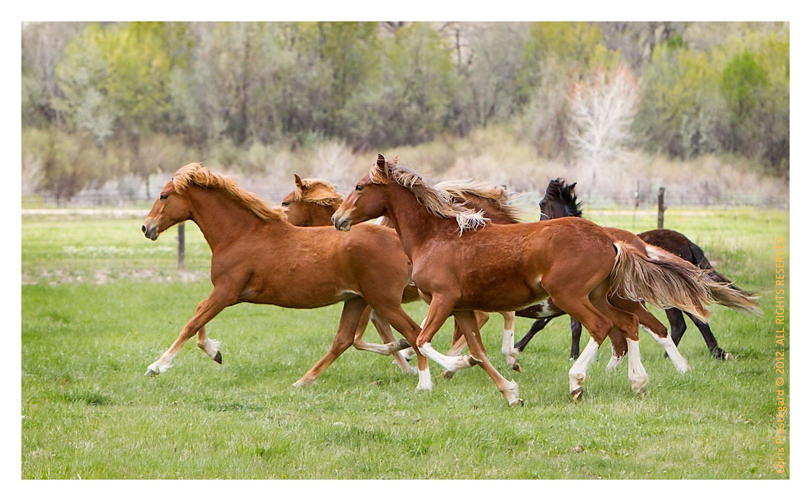 Horse3366-Feb11-2012