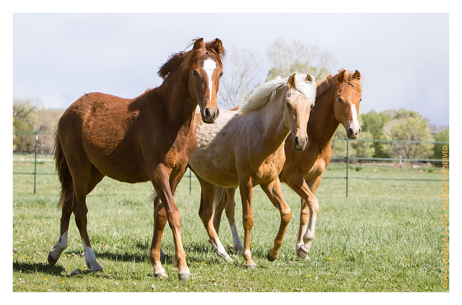 Horse3797-Feb18-2012