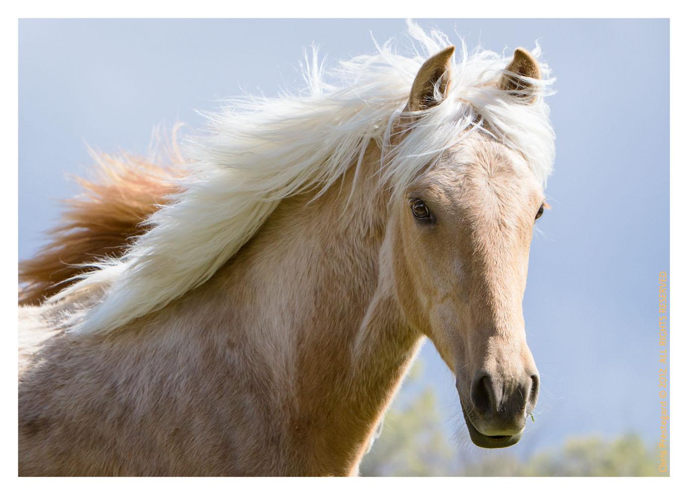 Horse3823-Feb18-2012