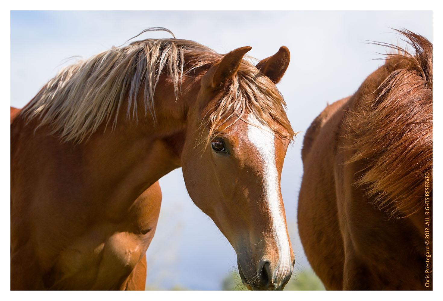 Horse3849-Feb17-2012