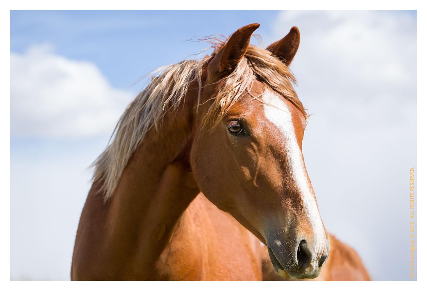 Horse3856-Feb15-2012