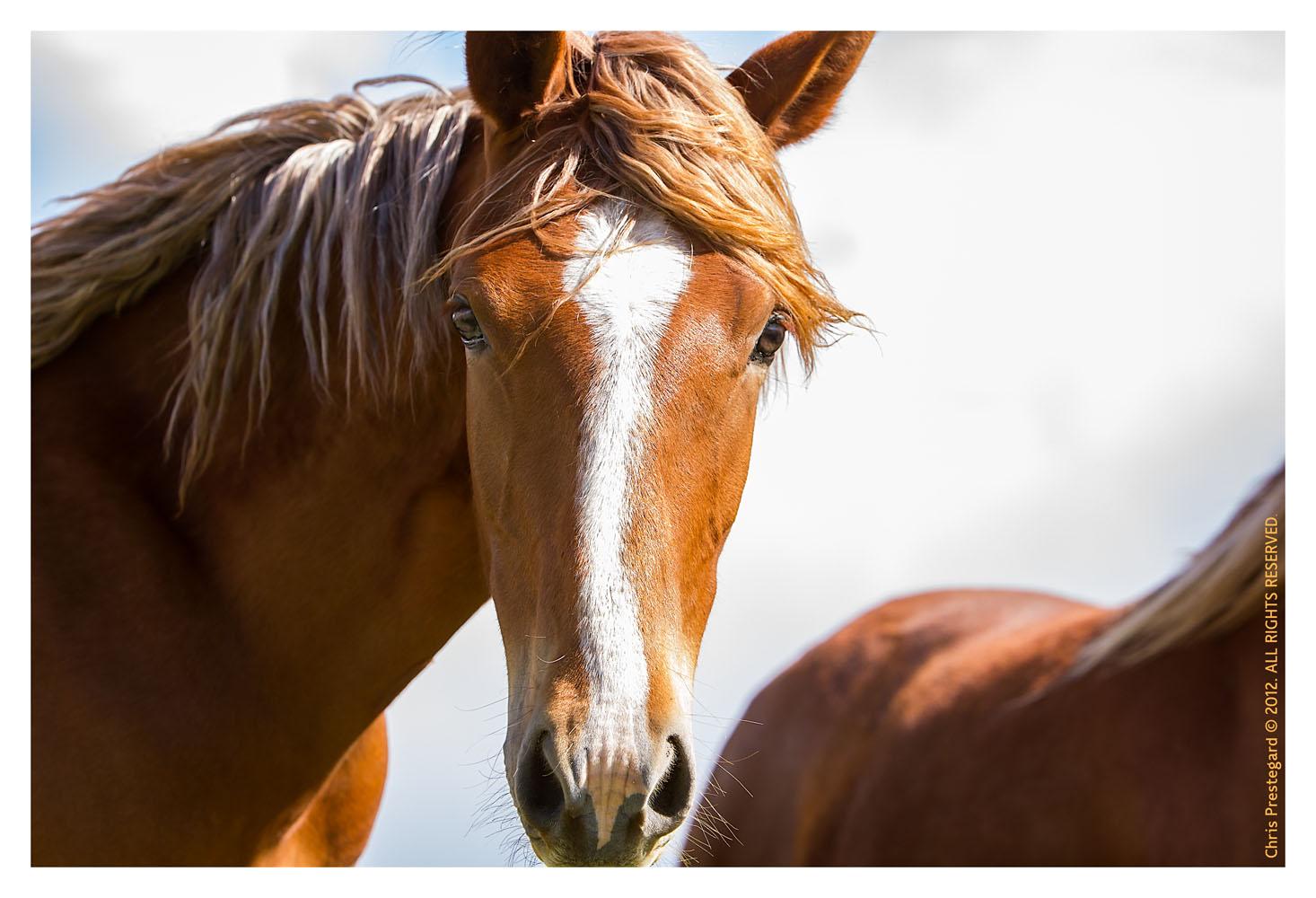 Horse3952-Feb13-2012
