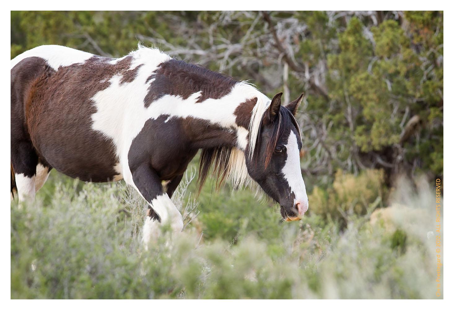 Horse4879-Feb17-2012