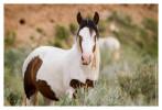 Horse5474-Jan31-2012