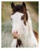 Horse5515_Jan30-2012