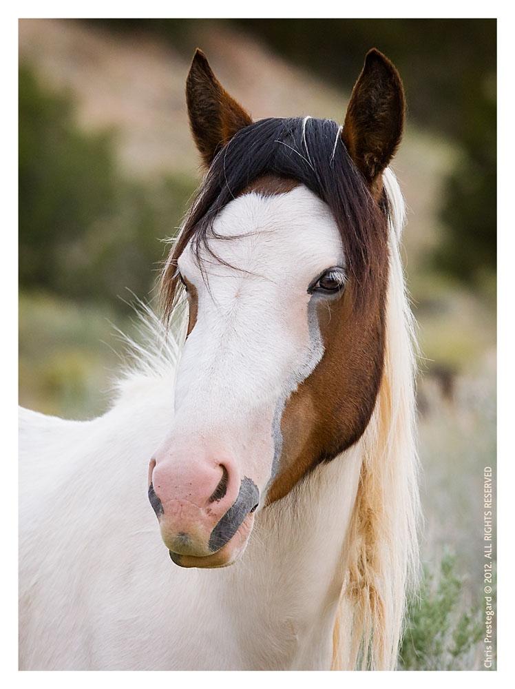 Horse5523_Jan31-2012