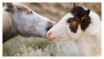 Horse5588_Jan30-2012