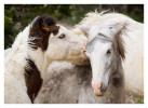 Horse569_Jan30-2012