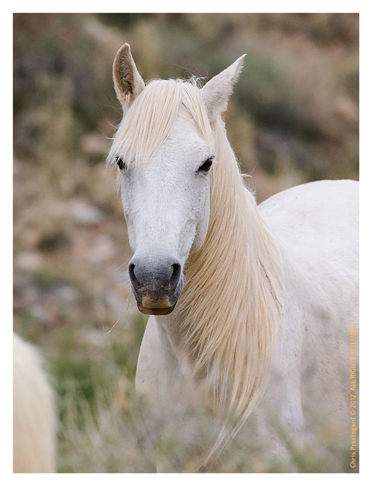 Horse5869_Jan29-2012