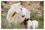 Horse6043_Jan29-2012