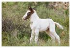 Horse6186_Jan29-2012