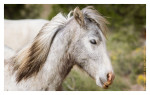 Horse650_Jan30-2012