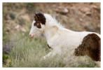 Horse6604_Jan30-2012