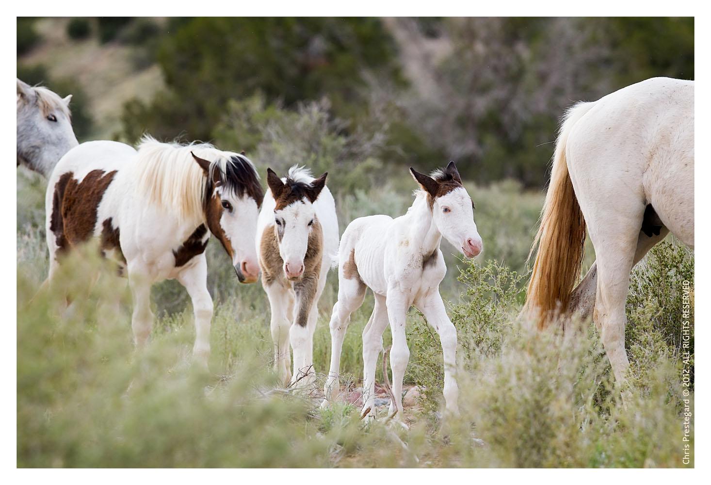 Horse6857_Jan31-2012