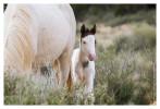 Horse6879_Feb1-2012