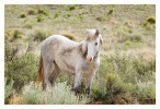 Horse7158_Feb9-2012