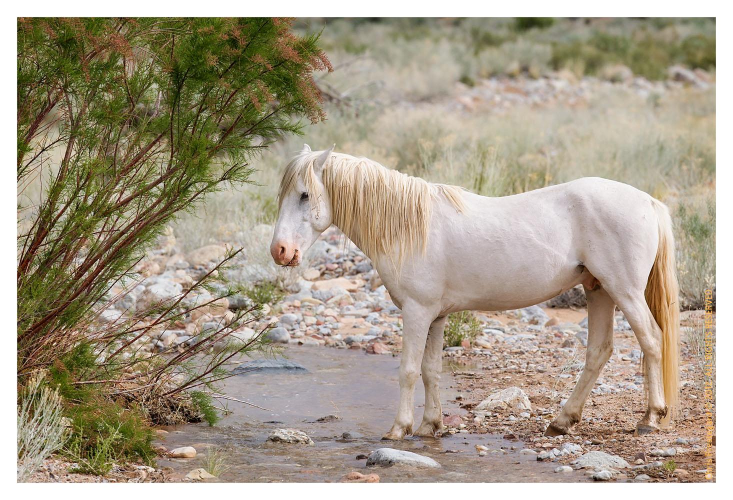 Horse7311_Jan29-2012