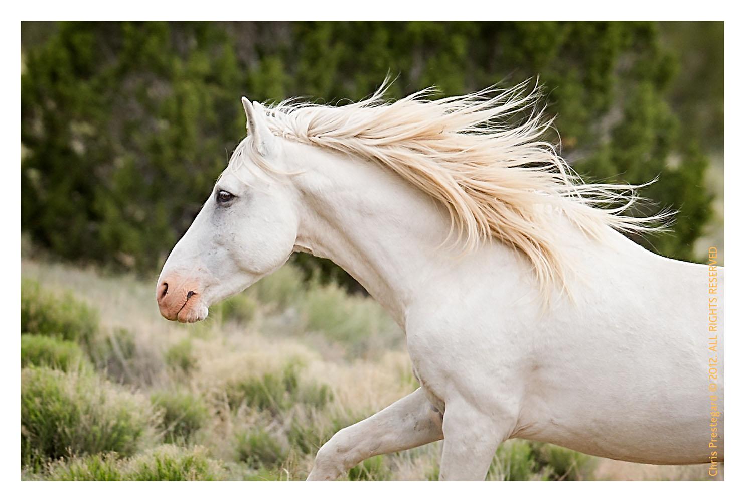 Horse7872_Feb1-2012