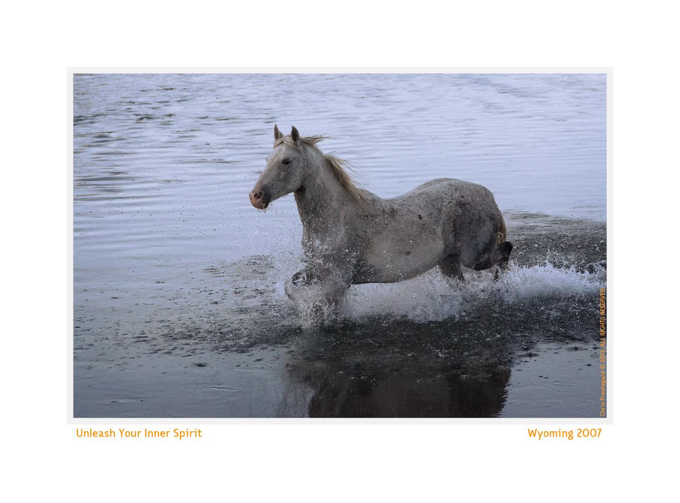 Horse8083-Oct4-2013