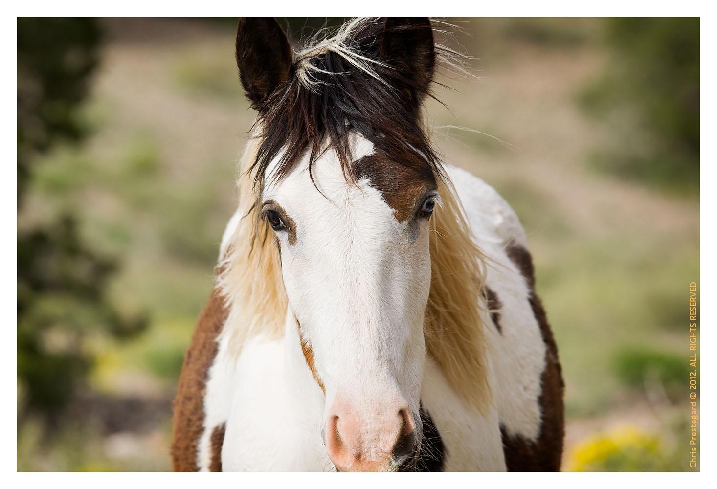 Horse810_Jan30-2012