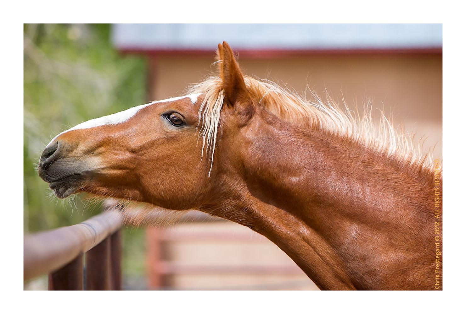 Horse844_Feb10-2012