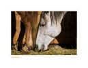 Horse9395_1-30-08