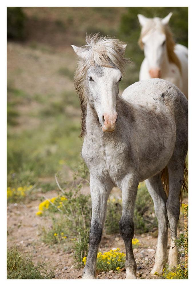 Horse947_Jan30-2012