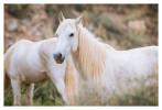Horses5720_Jan29-2012