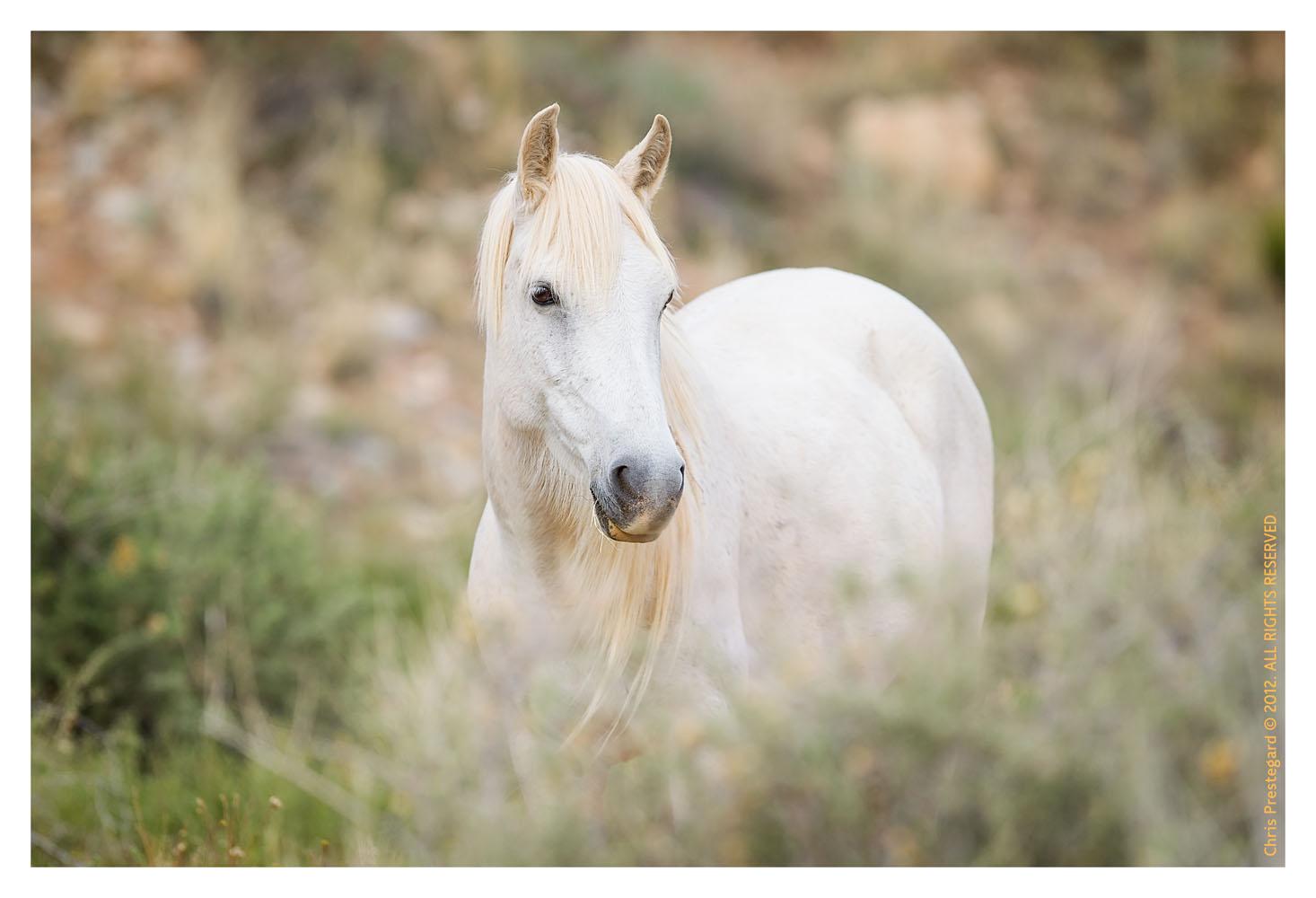 Horses5900_Jan29-2012