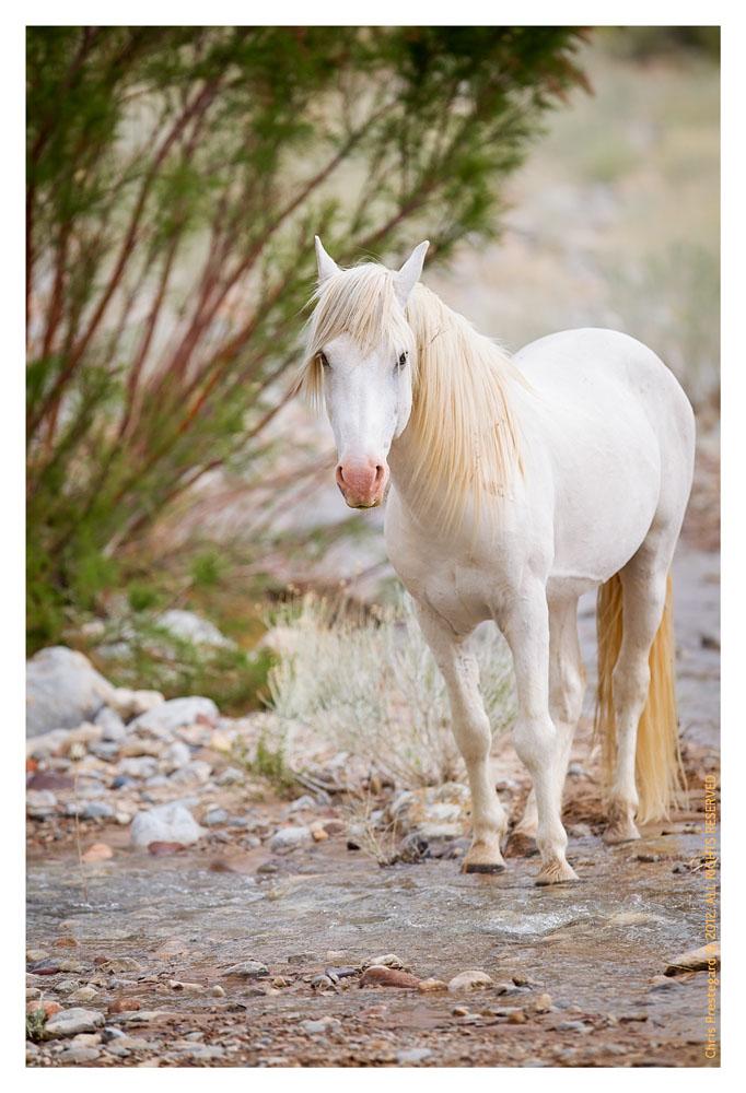 Horses7752_Jan29-2012