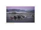Horses7759b_1-17-08