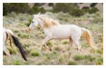 Horses7866_Jan31-2012