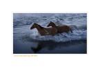 Horses8190M_1-17-08
