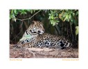 JaguarLook5224_Aug17-09