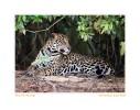 JaguarLook5224_Aug17-09
