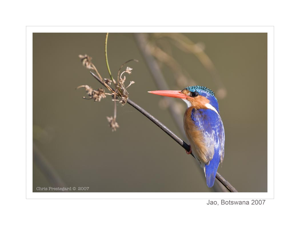 KingFisher1540_9-15-07
