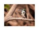 Kingfisher4558b_Aug18-09