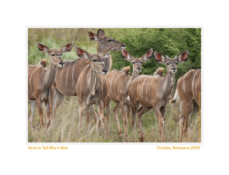 Kudu7647c_Sept27-2011