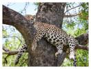 Leopard0015B_Apr212011