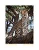 Leopard1398Wear-Nov24-09