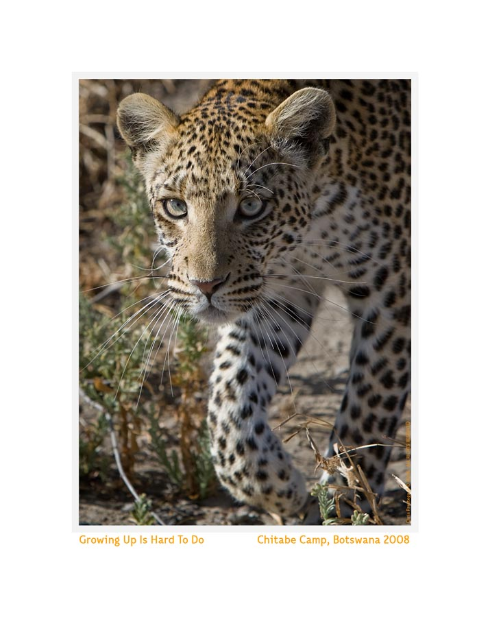 Leopard1605b_Aug25-08