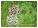 Leopard225D_May25-2011