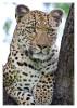 Leopard2341B_Apr21-2011