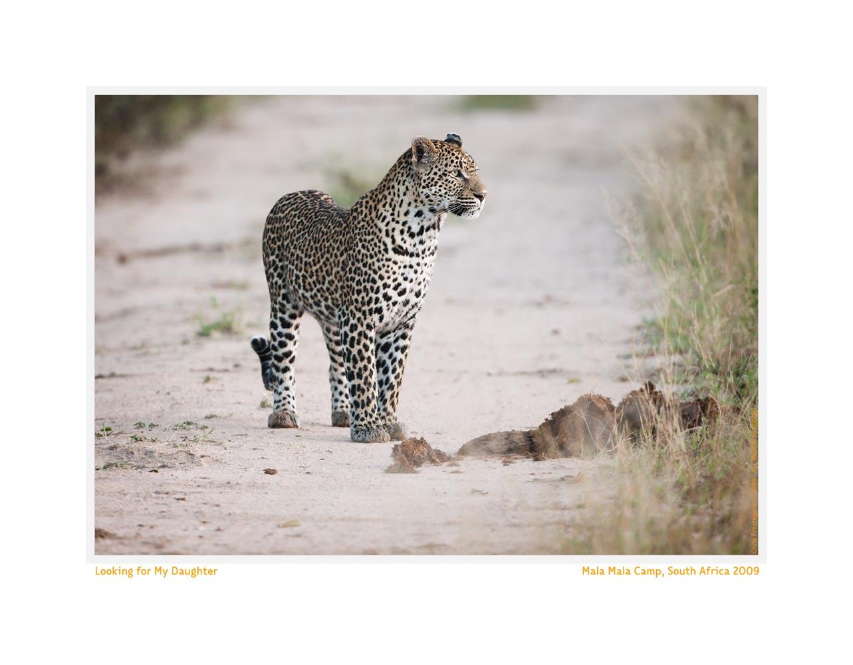 Leopard2644Daughter_Jun-09
